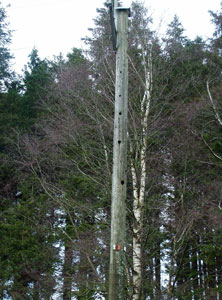 Honey Pole at Kielder